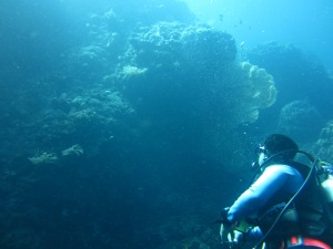 The Wall - East Bali Dive