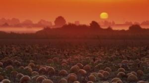 Sunrise-on-The-Pumpkin-Patch